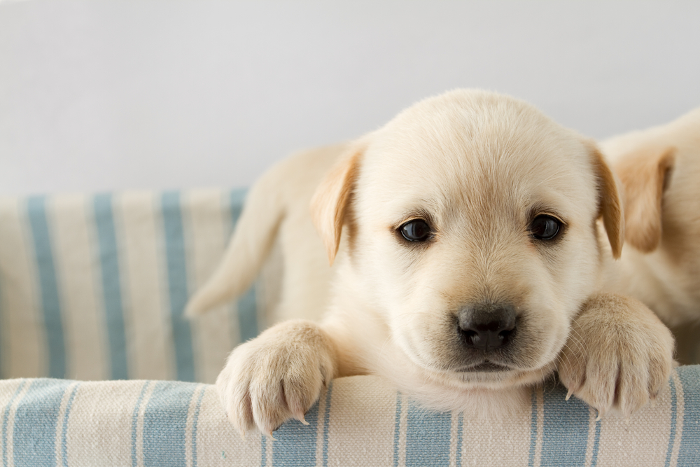 Helping Your Pet Adjust to the Move