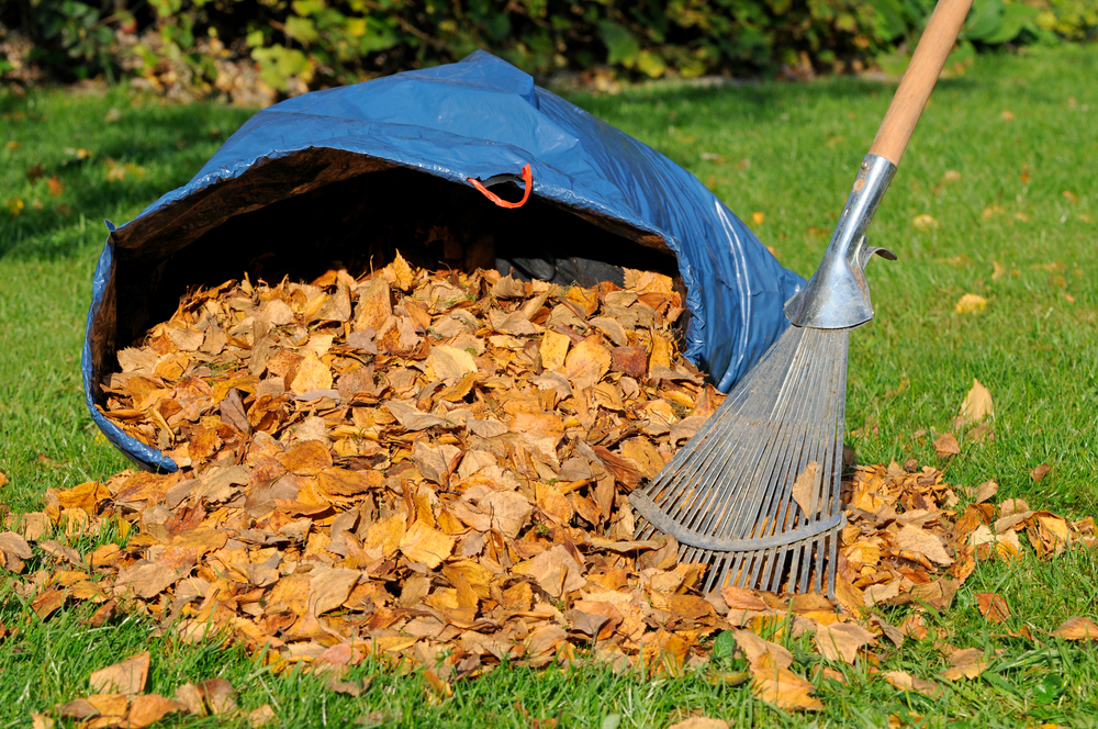 Your guide to fall lawn care